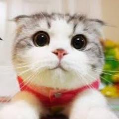 萌猫系cat room