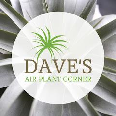 Dave's Air Plant Corner