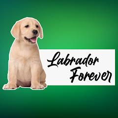 Labrador Forever