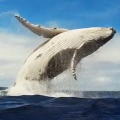 흰수염고래스포츠