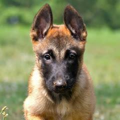 Adiestramiento Canino Dalecan
