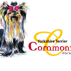 Coramonte Yorkshire Terrier