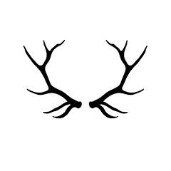 deer deer
