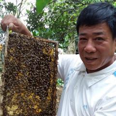 Kỹ thuật nuôi ong Tuấn Đỗ
