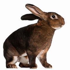 جحر الأرنب/Animals
