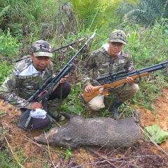 hunting sumatra