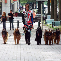 Augusto The Dog Trainer