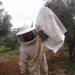 الاحتراف في تربية النحل