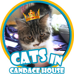 Cats In Candace House