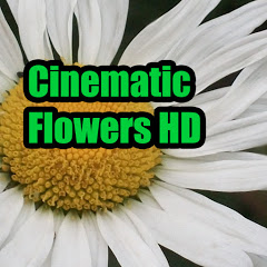 Cinematic Flowers HD