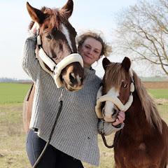 Les poneys de Lélou