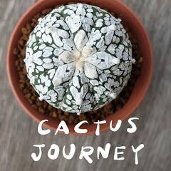 Cactus Journey
