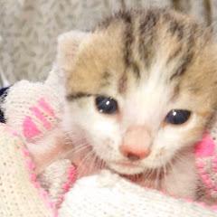 子猫と新米パパの成長記録