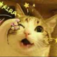 Charlie猫
