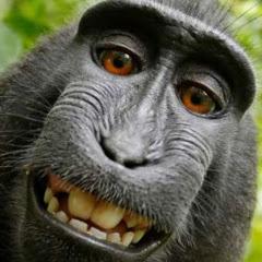ลิง กัง