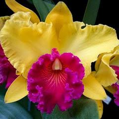 Carla e suas orquídeas