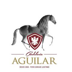 Cavalos Lusitanos Coudelaria Aguilar