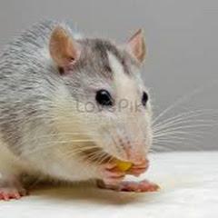 Mouse Trap 2020