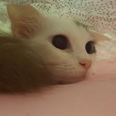 야옹해 바바 Miaow baba
