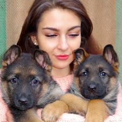 Канал о собаках Dog channel German shepherd