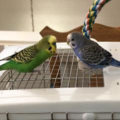 Kiwi and Pixel the Parakeets