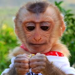 Monkey KAKO