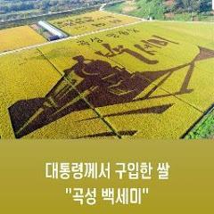 대통령께서 구입한 쌀곡성 백세미