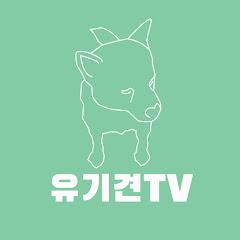 유기견TV