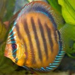 THE FISH AQUARIUM GUIDE