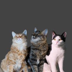 Lovely Kitty这俩货
